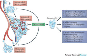 Cannabis-kills-cancer-diagram