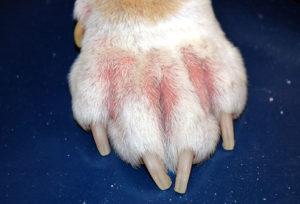 dog-pay-allergy11